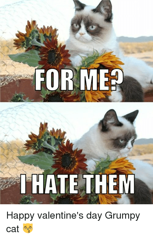 For Me I Hate Them Happy Valentine S Day Grumpy Cat Meme On Me Me