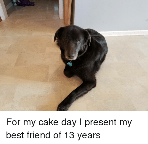 Best Friend And Cake For My Day I Present