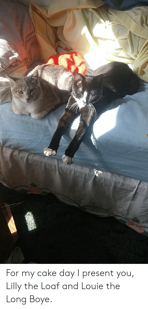 Cake, Louie, and Day: For my cake day I present you, Lilly the Loaf and Louie the Long Boye.