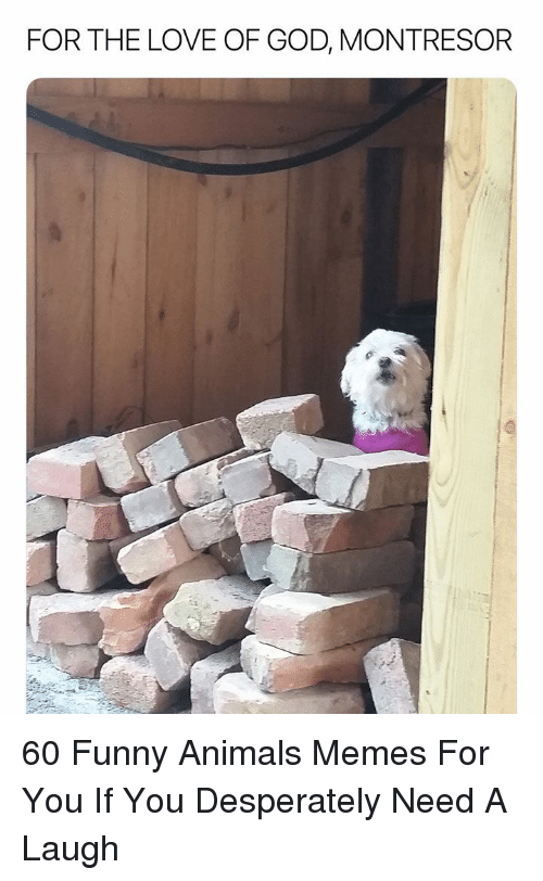 Animals, Funny, and Funny Animals: FOR THE LOVE OF GOD, MONTRESOR 60 Funny Animals Memes For You If You Desperately Need A Laugh