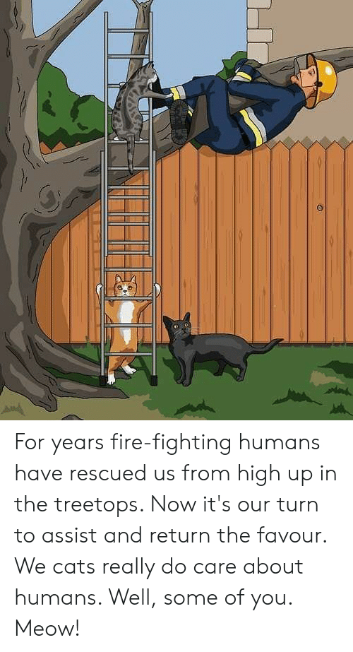 Cats, Fire, and Memes: For years fire-fighting humans have rescued us from high up in the treetops. Now it's our turn to assist and return the favour. We cats really do care about humans. Well, some of you. Meow!