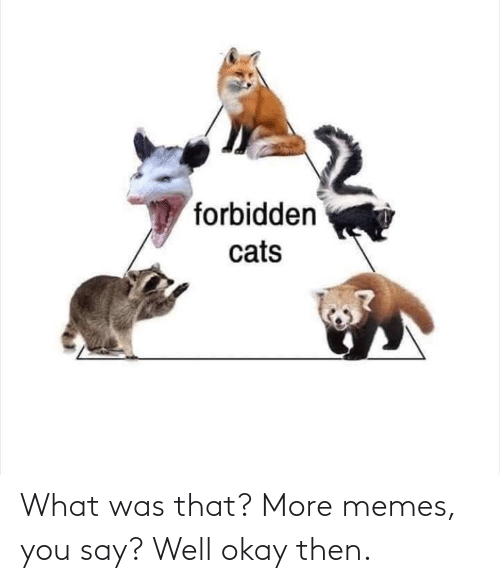 Cats, Memes, and Okay: forbidden  cats What was that? More memes, you say? Well okay then.