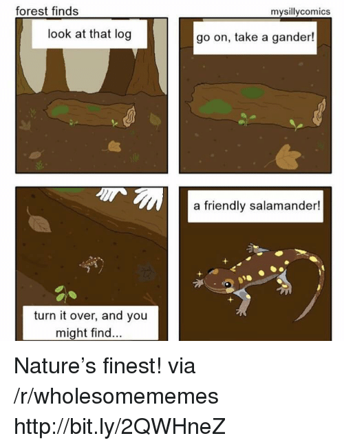 Http, Nature, and Forest: forest finds  mysillycomics  look at that log  go on, take a gander!  a friendly salamander  turn it over, and you  might find Nature's finest! via /r/wholesomememes http://bit.ly/2QWHneZ
