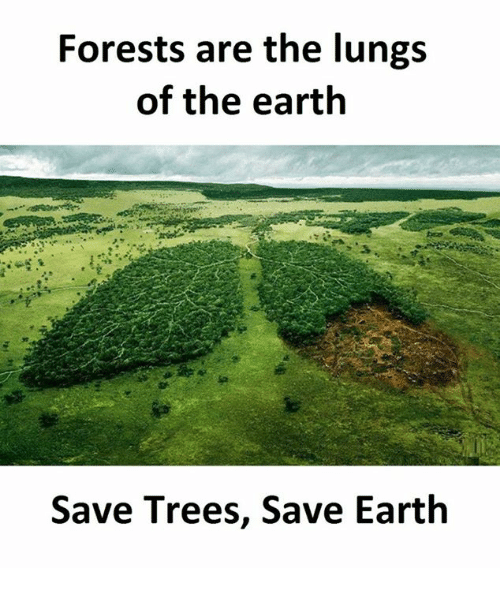 forests are the lungs of the earth Forests cover nearly 30% of the globe's land surfaces and are the environment on earth where the most animal and plant  forests are the lungs of the.