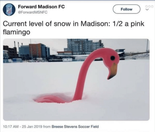 Soccer, Pink, and Snow: Forward Madison FC  Follow  @ForwardMSNFC  Current level of snow in Madison: 1/2 a pink  flamingo  10:17 AM-25 Jan 2019 from Breese Stevens Soccer Field