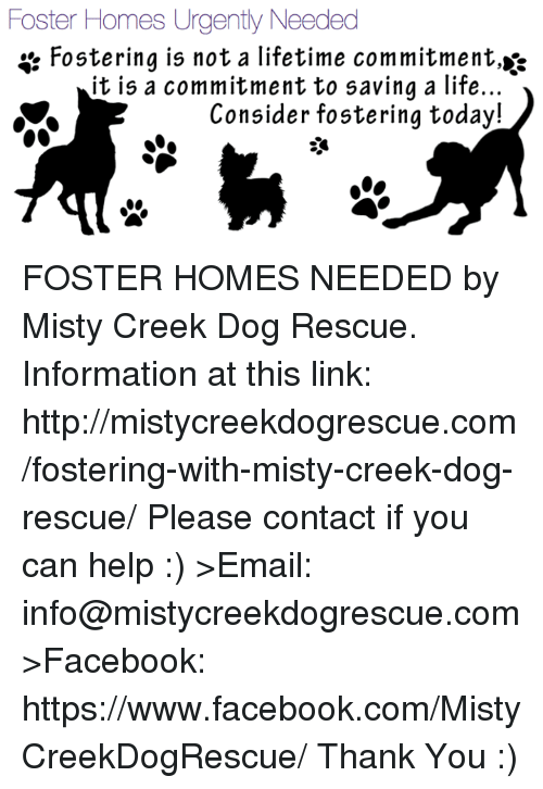 Foster Homes Urgently Needed Fostering Is Not a Lifetime