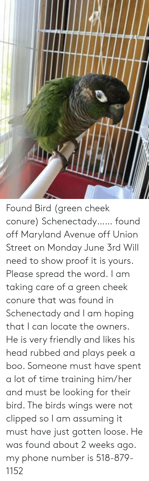 Boo, Head, and Memes: Found Bird (green cheek conure) Schenectady…… found off Maryland Avenue off Union Street on Monday June 3rd Will need to show proof it is yours.  Please spread the word.  I am taking care of a green cheek conure that was found in Schenectady and I am hoping that I can locate the owners. He is very friendly and likes his head rubbed and plays peek a boo.  Someone must have spent a lot of time training him/her and must be looking for their bird.  The birds wings were not clipped so I am assuming it must have just gotten loose.  He was found about 2 weeks ago.    my phone number  is 518-879-1152