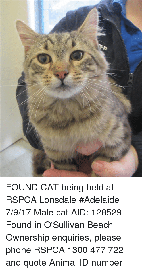 Memes, Phone, and Animal: FOUND CAT being held at RSPCA Lonsdale #Adelaide