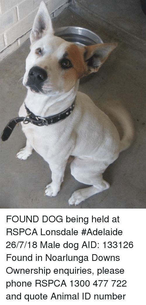 FOUND DOG Being Held at RSPCA Lonsdale #Adelaide 26718 Male