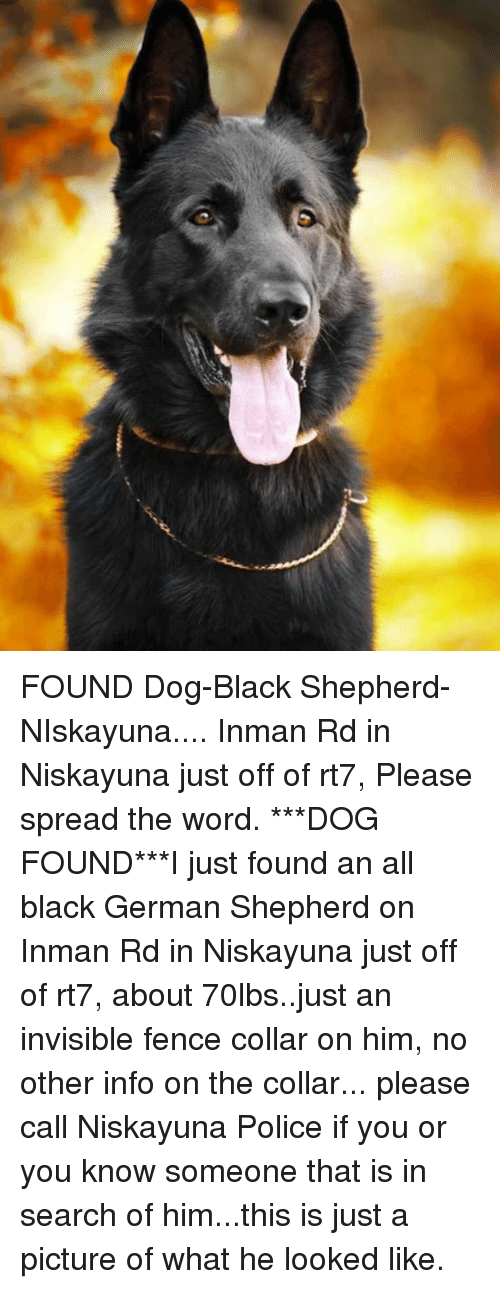 Memes, Police, and Black: FOUND Dog-Black Shepherd-NIskayuna.... Inman Rd in Niskayuna just off of rt7,  Please spread the word.  ***DOG FOUND***I just found an all black German Shepherd on Inman Rd in Niskayuna just off of rt7, about 70lbs..just an invisible fence collar on him, no other info on the collar...  please call Niskayuna Police if you or you know someone that is in search of him...this is just a picture of what he looked like.