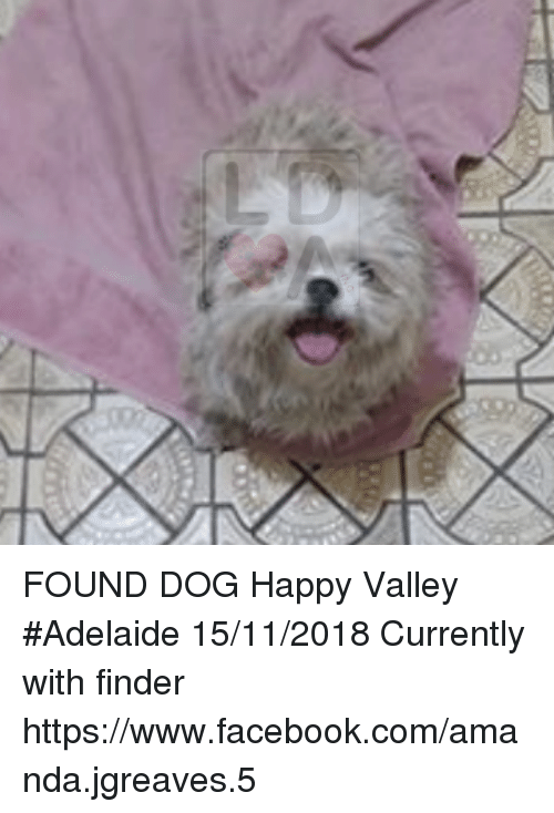 FOUND DOG Happy Valley #Adelaide 15112018 Currently With