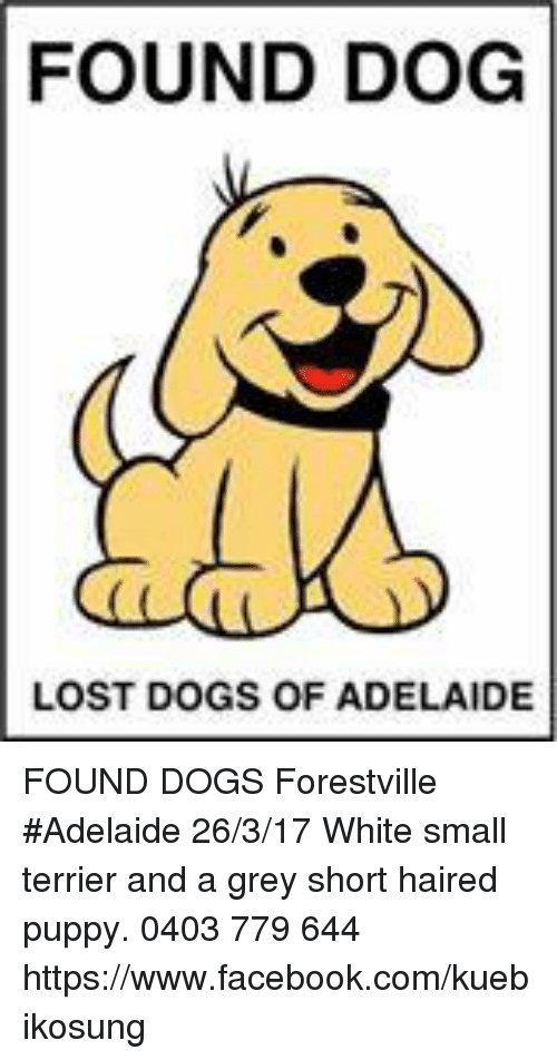 Found Dog Lost Dogs Of Adelaide Found Dogs Forestville Adelaide