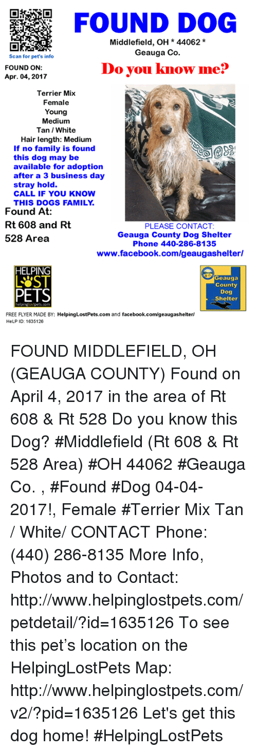 found-dog-middlefield-oh-44062-geauga-co-scan-for-pets-18638666.png