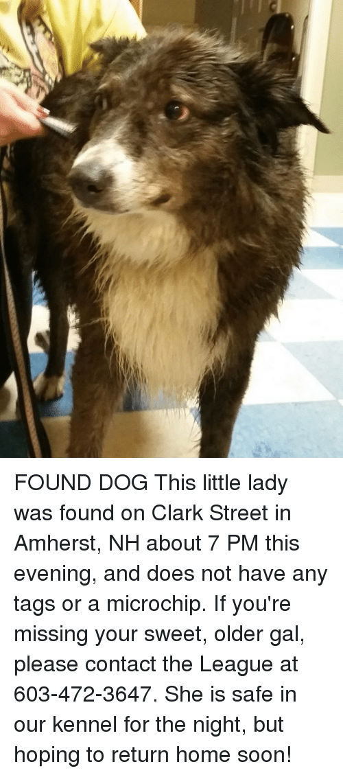 Memes, Soon..., and Home: FOUND DOG This little lady was found on Clark Street in Amherst, NH about 7 PM this evening, and does not have any tags or a microchip. If you're missing your sweet, older gal, please contact the League at 603-472-3647. She is safe in our kennel for the night, but hoping to return home soon!