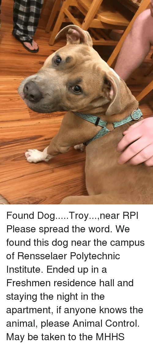 Found DogTroynear RPI Please Spread the Word We Found This