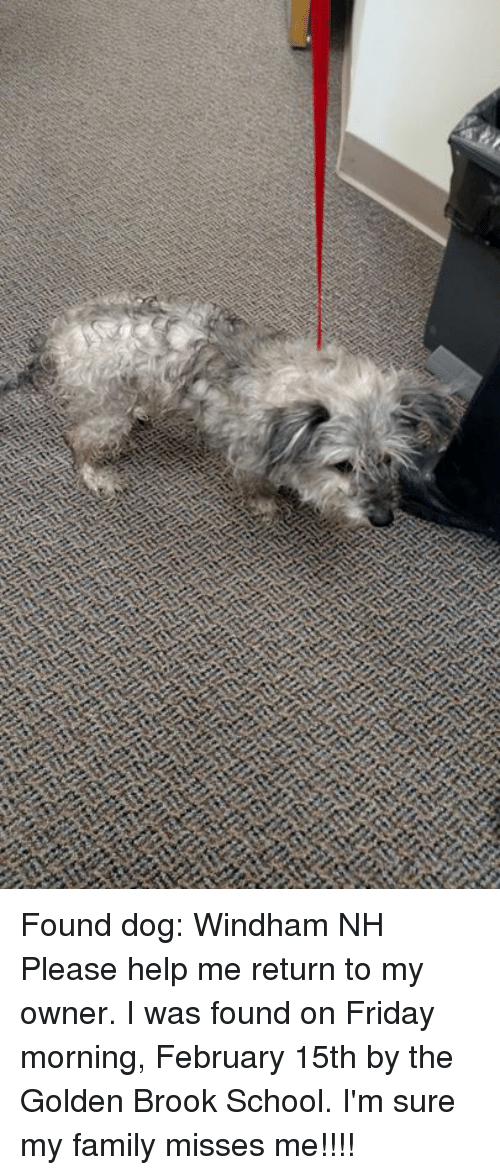 38429479 Family, Friday, and Memes: Found dog: Windham NH Please help me return