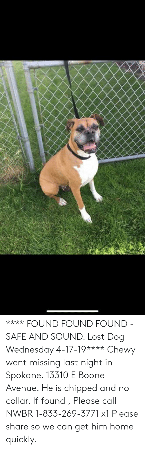 Memes, Lost, and Avenue: **** FOUND FOUND FOUND - SAFE AND SOUND.   Lost Dog Wednesday 4-17-19****  Chewy went missing last night in Spokane.     13310 E Boone Avenue.    He is chipped and no collar.   If found , Please call NWBR 1-833-269-3771 x1   Please share so we can get him home quickly.
