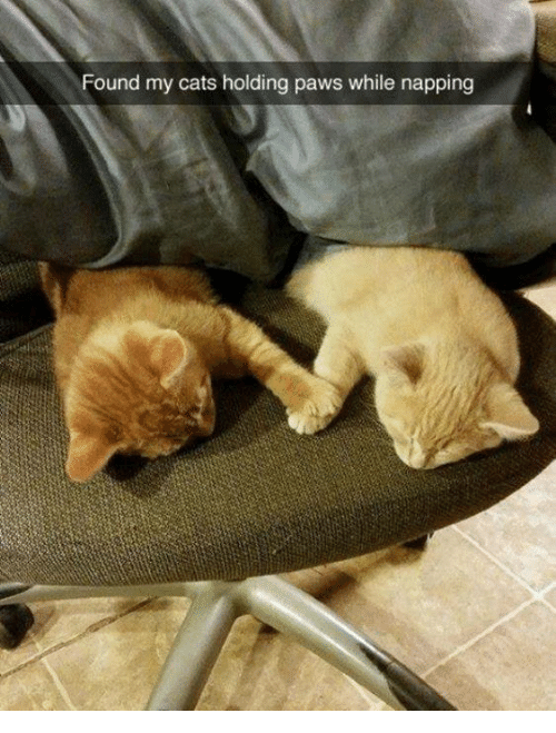 Cats, Memes, and 🤖: Found my cats holding paws while napping