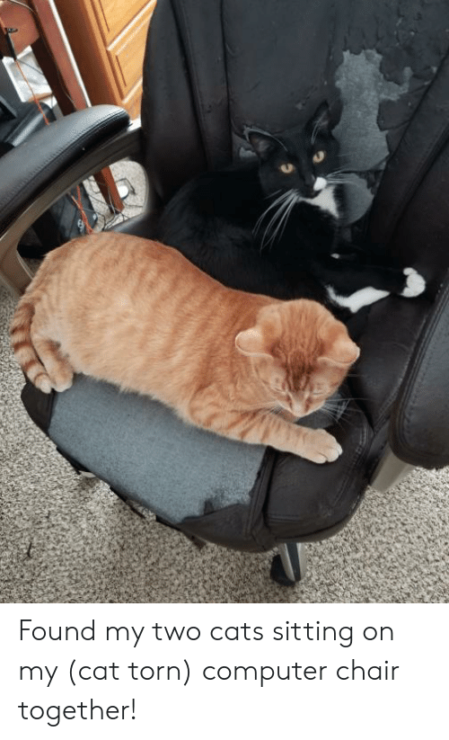 Found My Two Cats Sitting on My Cat Torn Computer Chair