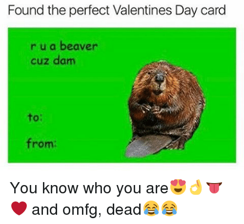 Found The Perfect Valentines Day Card R U A Beaver Cuz Damn To From