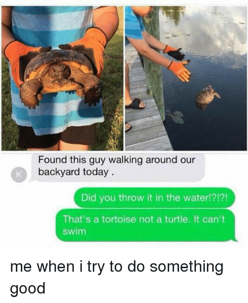 Girl Memes, Turtles, and Tortoise: Found this guy walking around our  backyard today  Did you throw it in the water!?!?!  That's a tortoise not a turtle. It can't  Swim me when i try to do something good