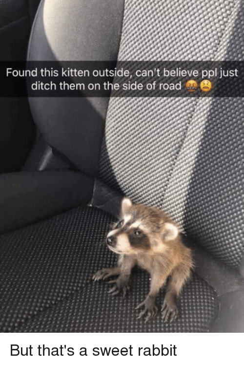 Dank, Rabbit, and 🤖: Found this kitten outside, can't believe ppl just  ditch them on the side of road  PO But that's a sweet rabbit