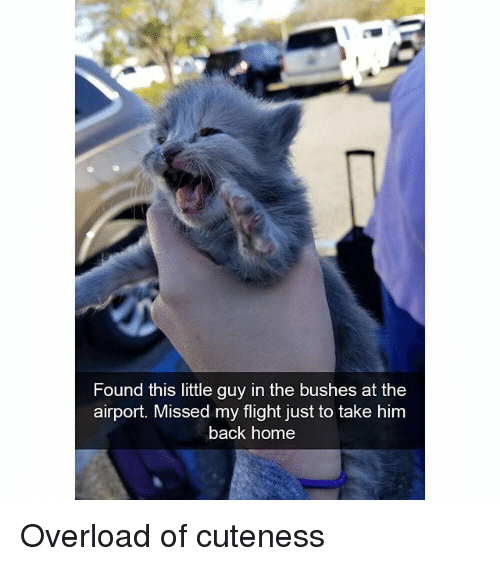 Funny, Flight, and Home: Found this little guy in the bushes at the  airport. Missed my flight just to take him  back home Overload of cuteness