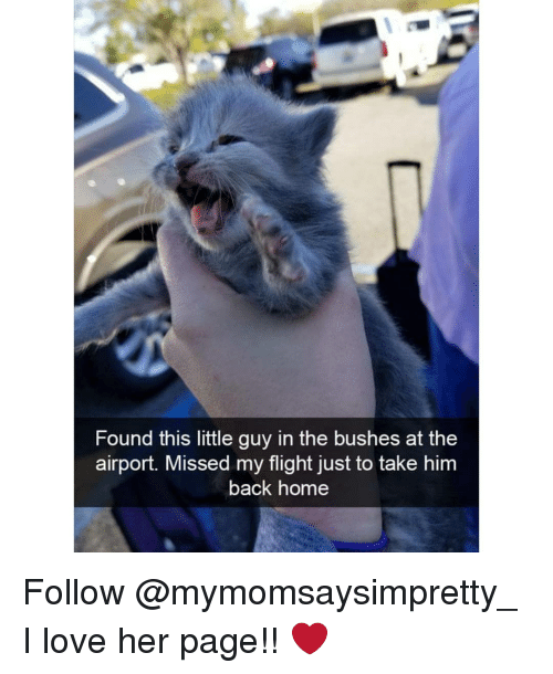 Love, Memes, and Flight: Found this little guy in the bushes at the  airport. Missed my flight just to take him  back home Follow @mymomsaysimpretty_ I love her page!! ❤