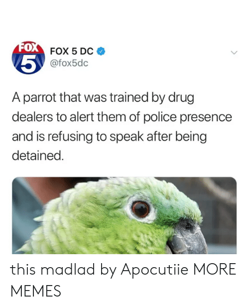 Dank, Memes, and Police: FOX 5 DC  @fox5dc  5  A parrot that was trained by drug  dealers to alert them of police presence  and is refusing to speak after being  detained. this madlad by Apocutiie MORE MEMES