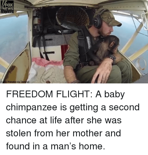 Life, Memes, and Flight: FOX  EWS  p Primates via Storful FREEDOM FLIGHT: A baby chimpanzee is getting a second chance at life after she was stolen from her mother and found in a man's home.