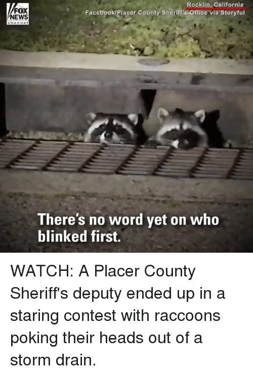 Facebook, Memes, and California: FOX  EWS  Rocklin, California  Facebook/Placer County Sheriff's-Office via Storyful  There's no word yet on who  blinked first. WATCH: A Placer County Sheriff's deputy ended up in a staring contest with raccoons poking their heads out of a storm drain.