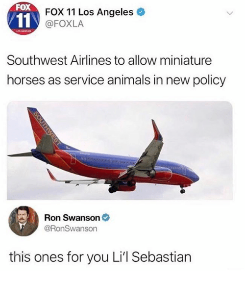 Animals, Horses, and Ron Swanson: FOX  FOX 11 Los Angeles  @FOXLA  Southwest Airlines to allow miniature  horses as service animals in new policy  Ron Swanson  @RonSwanson  this ones for you Li'l Sebastian