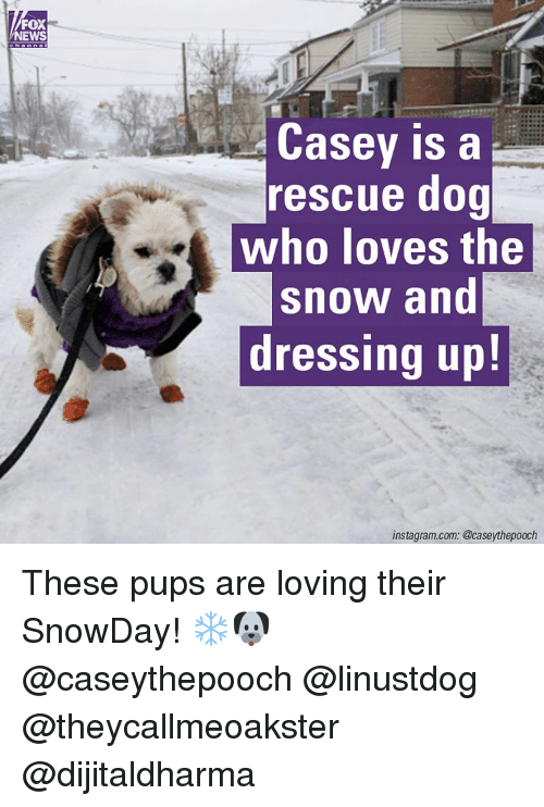 Memes, 🤖, and Fox: FOX  NEWS  Casey is a  rescue dog  who loves the  snow and  dressing up!  instagram.com. @case ythepooch These pups are loving their SnowDay! ❄️🐶@caseythepooch @linustdog @theycallmeoakster @dijitaldharma