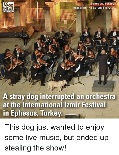 Instagram, Memes, and Music: FOX  NEWS  Ephesus, Turkey  Instagram/IKSEV via Storyful  A stray dog interrupted an orchestra  at the International Izmir Festival  in Ephesus, Turkey This dog just wanted to enjoy some live music, but ended up stealing the show!