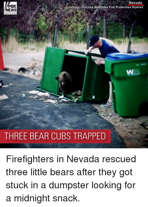 Fire, Memes, and News: FOX  NEWS  Nevada  Courtesy: Truckee Meadows Fire Protection District  THREE BEAR CUBS TRAPPED Firefighters in Nevada rescued three little bears after they got stuck in a dumpster looking for a midnight snack.