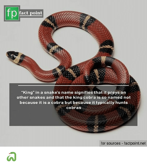 fp fact point king in a snake s name signifies that it preys on