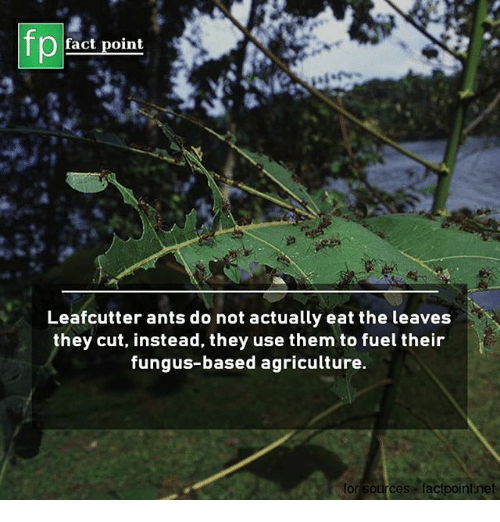 leaf cutter ants and fungus relationship with god