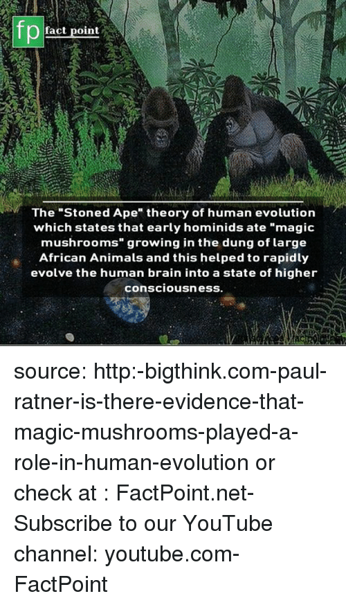 "Animals, Memes, and youtube.com: fp  fact point  The ""Stoned Ape"" theory of human evolution  which states that early hominids ate ""magic  mushrooms growing in the dung of large  African Animals and this helped to rapidly  evolve the human brain into a state of higher  consciousnesS. source: http:-bigthink.com-paul-ratner-is-there-evidence-that-magic-mushrooms-played-a-role-in-human-evolution or check at : FactPoint.net- Subscribe to our YouTube channel: youtube.com-FactPoint"