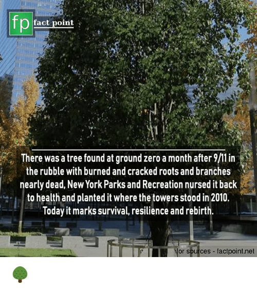 Memes, New York, and Parks and Recreation: fp  fact point  There was a tree found at ground zero a month after  the rubble with burned and cracked roots and branches  nearly dead, New York Parks and Recreation nursed it back  to health and planted it where thetowers stood in 2010.  loday it marks survival, resilience and rebirth  or sources factpoint.net 🌳