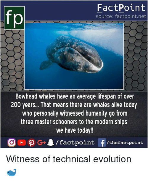 Alive, Bailey Jay, and Memes: fp  FactPoint  source: factpoint.net  Bowhead whales have an average lifespan of over  200 years... That means there are whales alive today  who personally witnessed humanity go from  three master schooners to the modern ships  we have today!! Witness of technical evolution 🐋
