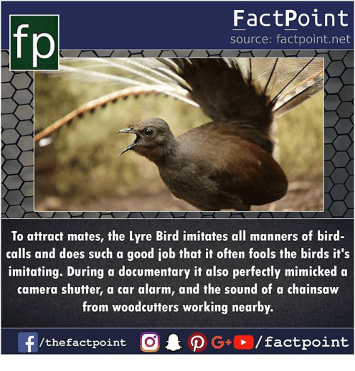 Memes, Alarm, and Birds: fp  FactPoint  source: factpoint.net  To attract mates, the Lyre Bird imitates all manners of bird-  calls and does such a good job that it often fools the birds it's  imitating. During a documentary it also perfectly mimicked a  camera shutter, a car alarm, and the sound of a chainsaw  from woodcutters working nearby.