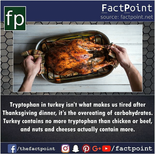 Beef, Memes, and Thanksgiving: fp  FactPoint  source: factpoint.net  Tryptophan in turkey isn't what makes us tired after  Thanksgiving dinner, it's the overeating of carbohydrates.  Turkey contains no more tryptophan than chicken or beef  and nuts and cheeses actually contain more.