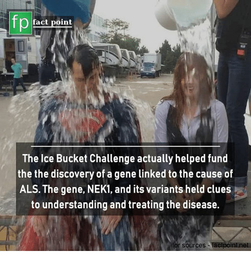 Memes, Understanding, and 🤖: fp  O fact point  The Ice Bucket Challenge actually helped fund  the the discovery of a gene linked to the cause of  ALS. The gene, NEK1, and its variants held clues  to understanding and treating the disease.  for sources -faclpoint.net