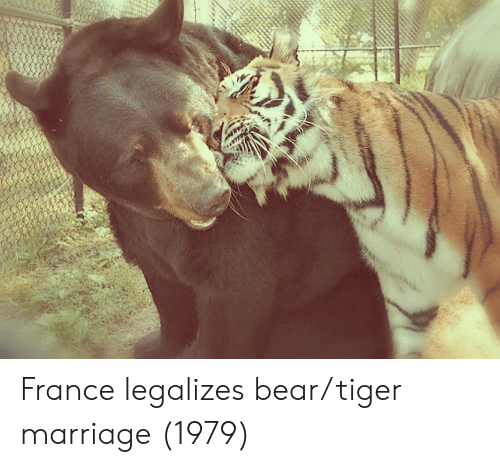 Marriage, Bear, and France: France legalizes bear/tiger marriage (1979)