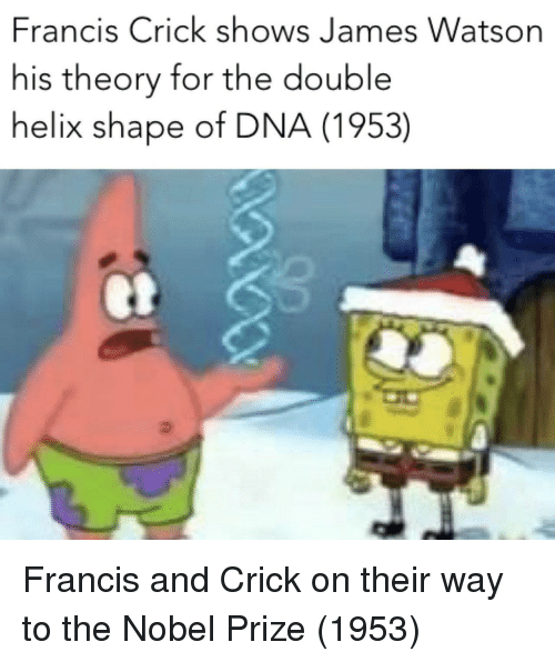Nobel Prize, Helix, and Dna: Francis Crick shows James Watson  his theory for the double  helix shape of DNA (1953) Francis and Crick on their way to the Nobel Prize (1953)