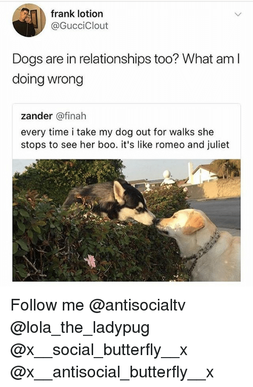 Boo, Dogs, and Memes: frank lotion  @GucciClout  Dogs are in relationships too? What aml  doing wrong  zander @finah  every time i take my dog out for walks she  stops to see her boo. it's like romeo and juliet Follow me @antisocialtv @lola_the_ladypug @x__social_butterfly__x @x__antisocial_butterfly__x