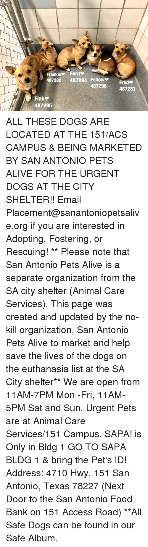 Alive, Dogs, and Food: Frankie Ferns  487282 487294 Fellow  Fred  487296  487283  Fink  487295 ALL THESE DOGS ARE LOCATED AT THE 151/ACS CAMPUS & BEING MARKETED BY SAN ANTONIO PETS ALIVE FOR THE URGENT DOGS AT THE CITY SHELTER!!  Email Placement@sanantoniopetsalive.org if you are interested in Adopting, Fostering, or Rescuing!                                                                                                                                                                                                                                                                                                                                                             ** Please note that San Antonio Pets Alive is a separate organization from the SA city shelter (Animal Care Services). This page was created and updated by the no-kill organization, San Antonio Pets Alive to market and help save the lives of the dogs on the euthanasia list at the SA City shelter**  We are open from 11AM-7PM Mon -Fri, 11AM-5PM Sat and Sun. Urgent Pets are at Animal Care Services/151 Campus. SAPA! is Only in Bldg 1 GO TO SAPA BLDG 1 & bring the Pet's ID! Address: 4710 Hwy. 151 San Antonio, Texas 78227 (Next Door to the San Antonio Food Bank on 151 Access Road) **All Safe Dogs can be found in our Safe Album.