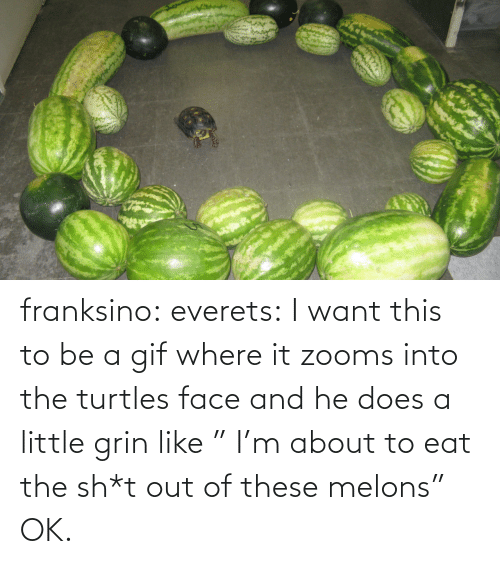 """Gif, Target, and Tumblr: franksino: everets:  I want this to be a gif where it zooms into the turtles face and he does a little grin like """" I'm about to eat the sh*t out of these melons""""  OK."""