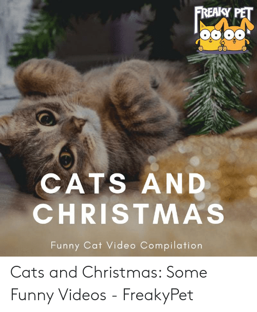 681f2d6d6 Cats, Christmas, and Funny: FREAKY PET CATS AND CHRISTMAS Funny Cat Video  Compilation