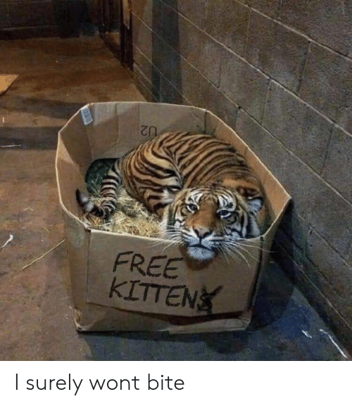 Free, Bite, and Surely: FREE  KETTEN!( I surely wont bite